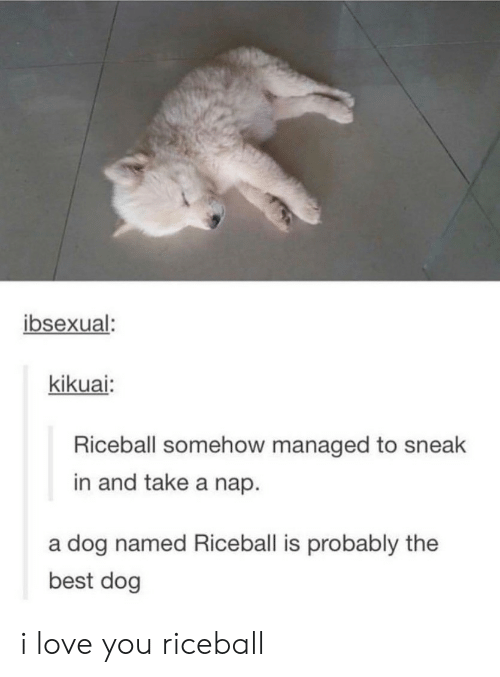 Love, I Love You, and Best: ibsexual  kikuai:  Riceball somehow managed to sneak  in and take a nap.  a dog named Riceball is probably the  best dog i love you riceball