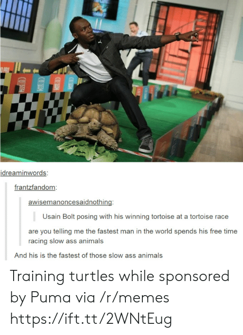 Animals, Ass, and Memes: idreaminwords:  frantzfandom  awisemanoncesaidnothing:  Usain Bolt posing with his winning tortoise at a tortoise race  are you telling me the fastest man in the world spends his free time  racing slow ass animals  And his is the fastest of those slow ass animals Training turtles while sponsored by Puma via /r/memes https://ift.tt/2WNtEug