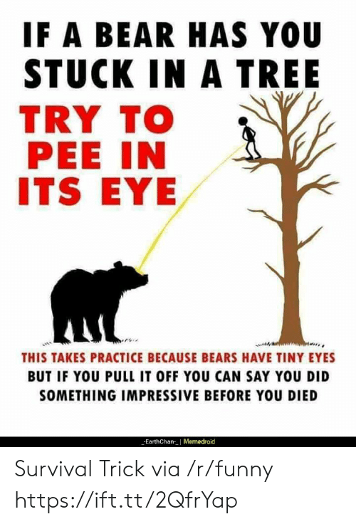 Funny, Bear, and Bears: IF A BEAR HAS YOU  STUCK IN A TREE  TRY TO  PEE IN  ITS EYE  THIS TAKES PRACTICE BECAUSE BEARS HAVE TINY EYES  BUT IF YOU PULL IT OFF YOU CAN SAY YOU DID  SOMETHING IMPRESSIVE BEFORE YOU DIED  EarthChan| Memedroid Survival Trick via /r/funny https://ift.tt/2QfrYap