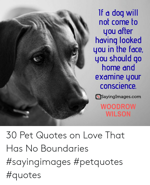 Love, Home, and Quotes: If a dog will  not come to  you after  having looked  you in the face,  you should go  home and  examine your  conscience  SayingImages.com  WOODROW  WILSON 30 Pet Quotes on Love That Has No Boundaries #sayingimages #petquotes #quotes