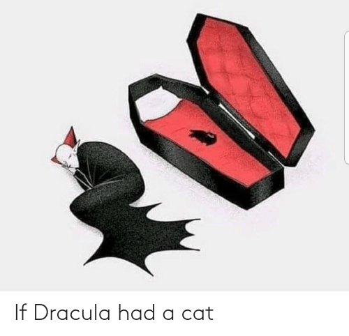 a cat: If Dracula had a cat