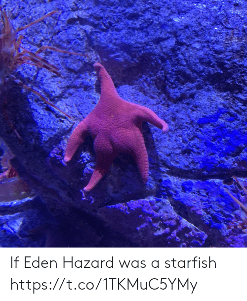 hazard: If Eden Hazard was a starfish https://t.co/1TKMuC5YMy