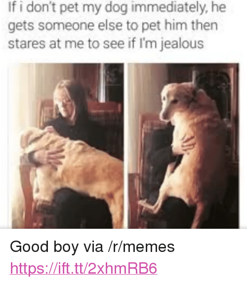 """Im Jealous: If i don't pet my dog immediately, he  gets someone else to pet him then  stares at me to see if I'm jealous <p>Good boy via /r/memes <a href=""""https://ift.tt/2xhmRB6"""">https://ift.tt/2xhmRB6</a></p>"""