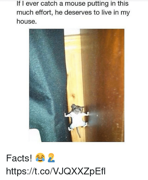 Facts, My House, and House: If l ever catch a mouse putting in this  much efort, he deserves to live in my  house. Facts! 😂🤦♂️ https://t.co/VJQXXZpEfl