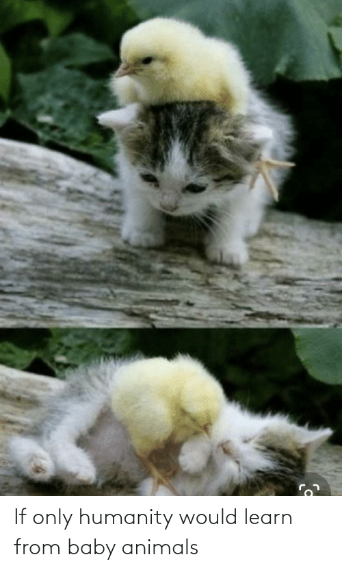 Baby Animals: If only humanity would learn from baby animals