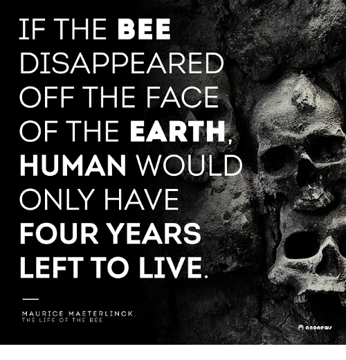 Life, Memes, and Earth: IF THE BEE  DISAPPEARED  OFF THE FACE  OF THE EARTH  A  HUMAN WOULD  ONLY HAVE  FOUR YEARS  LEFT TO LIVE  MAURICE MAETERLINCK.  THE LIFE OF THE BEE  anonews