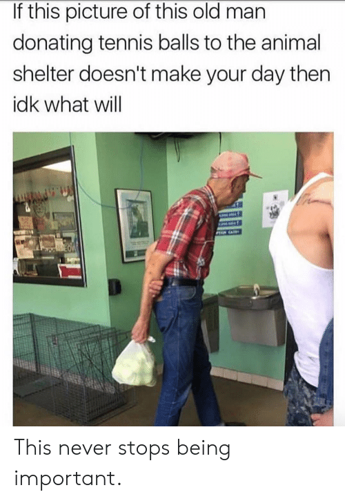 Old Man, Animal, and Animal Shelter: If this picture of this old man  donating tennis balls to the animal  shelter doesn't make your day then  idk what will This never stops being important.