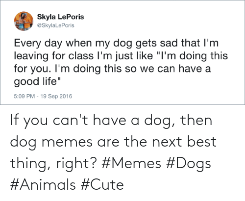 Have A: If you can't have a dog, then dog memes are the next best thing, right? #Memes #Dogs #Animals #Cute