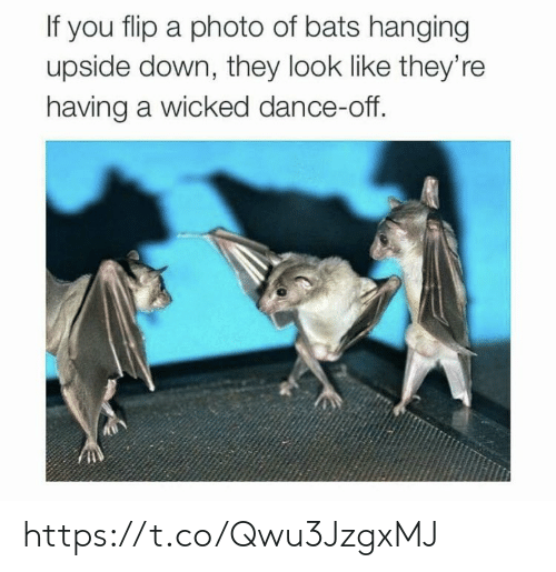 Wicked: If you flip a photo of bats hanging  upside down, they look like they're  having a wicked dance-off. https://t.co/Qwu3JzgxMJ