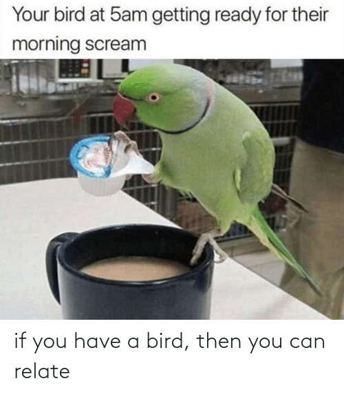 bird: if you have a bird, then you can relate