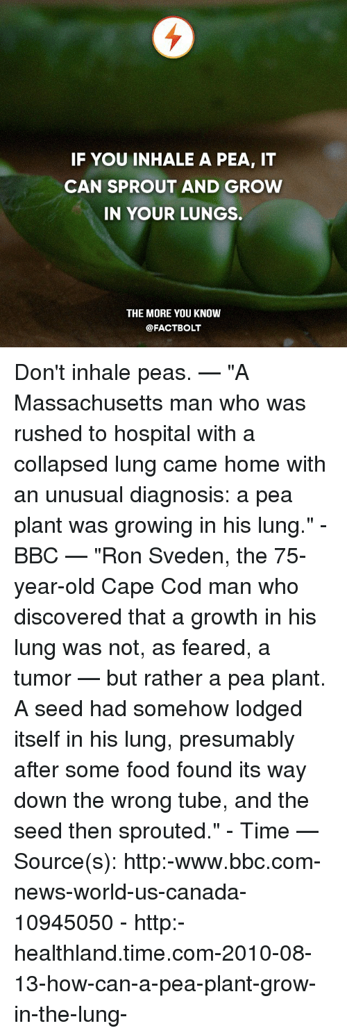 """sprout: IF YOU INHALE A PEA, IT  CAN SPROUT AND GROW  IN YOUR LUNGS.  THE MORE YOU KNOW  @FACT BOLT Don't inhale peas. — """"A Massachusetts man who was rushed to hospital with a collapsed lung came home with an unusual diagnosis: a pea plant was growing in his lung."""" - BBC — """"Ron Sveden, the 75-year-old Cape Cod man who discovered that a growth in his lung was not, as feared, a tumor — but rather a pea plant. A seed had somehow lodged itself in his lung, presumably after some food found its way down the wrong tube, and the seed then sprouted."""" - Time — Source(s): http:-www.bbc.com-news-world-us-canada-10945050 - http:-healthland.time.com-2010-08-13-how-can-a-pea-plant-grow-in-the-lung-"""