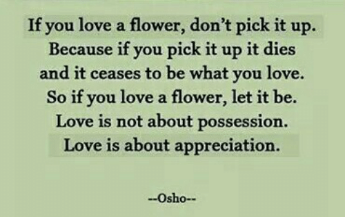 Love, Flower, and Osho: If you love a flower, don't pick it up.  Because if you pick it up it dies  and it ceases to be what you love.  So if you love a flower, let it be.  Love is not about possession.  Love is about appreciation.  Osho-