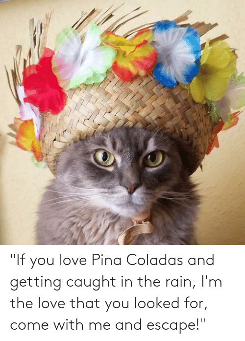 """You Looked: """"If you love Pina Coladas and getting caught in the rain, I'm the love that you looked for, come with me and escape!"""""""