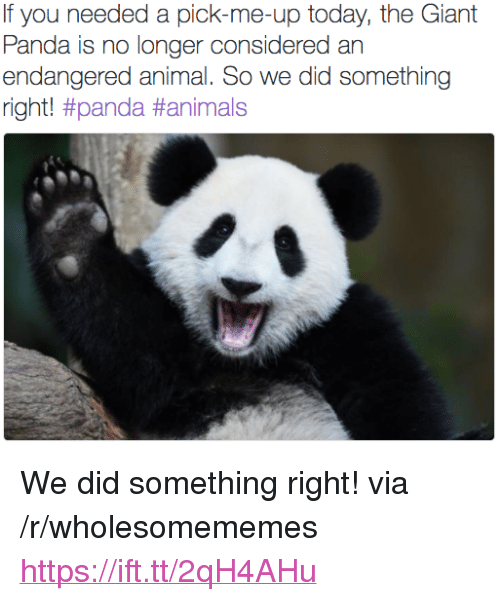 """giant panda: If you needed a pick-me-up today, the Giant  Panda is no longer considered an  endangered animal. So we did something  right! <p>We did something right! via /r/wholesomememes <a href=""""https://ift.tt/2qH4AHu"""">https://ift.tt/2qH4AHu</a></p>"""