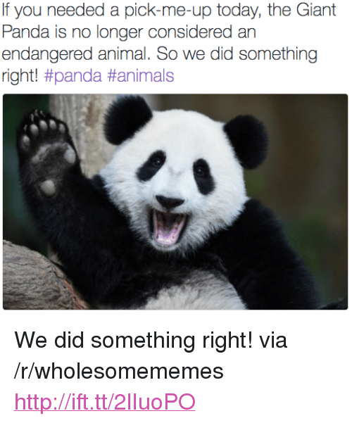 """giant panda: If you needed a pick-me-up today, the Giant  Panda is no longer considered an  endangered animal. So we did something  right! <p>We did something right! via /r/wholesomememes <a href=""""http://ift.tt/2lIuoPO"""">http://ift.tt/2lIuoPO</a></p>"""