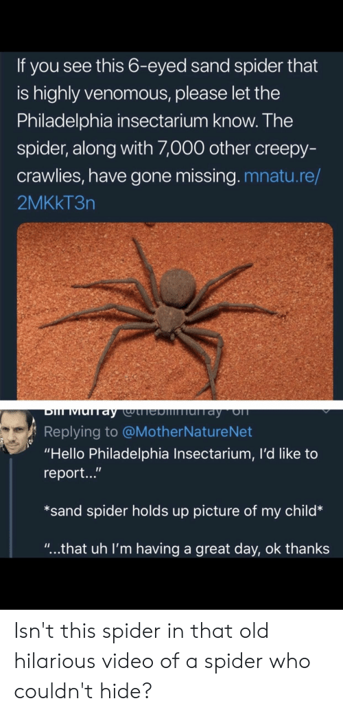 """Creepy, Hello, and Spider: If you see this 6-eyed sand spider that  is highly venomous, please let the  Philadelphia insectarium know. The  spider, along with ,000 other creepy-  crawlies, have gone missing. mnatu.re/  2MKkT3n  Replying to @MotherNatureNet  """"Hello Philadelphia Insectarium, I'd like to  report...""""  *sand spider holds up picture of my child*  """"...that uh I'm having a great day, ok thanks Isn't this spider in that old hilarious video of a spider who couldn't hide?"""