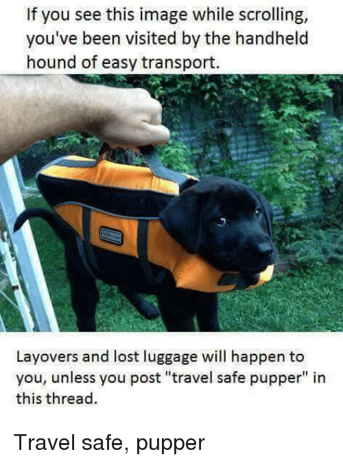 """If You See This Image While Scrolling: If you see this image while scrolling,  you've been visited by the handheld  hound of easy transport.  Layovers and lost luggage will happen to  you, unless you post """"travel safe pupper"""" in  this thread Travel safe, pupper"""