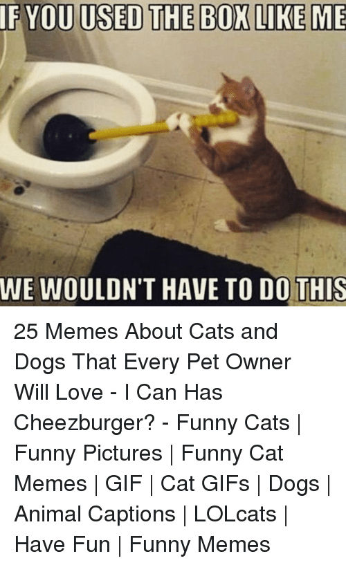 cheezburger: IF YOU USED THE BOX LIKE ME  WE WOULDN'T HAVE TO DO!THIS 25 Memes About Cats and Dogs That Every Pet Owner Will Love - I Can Has Cheezburger? - Funny Cats | Funny Pictures | Funny Cat Memes | GIF | Cat GIFs | Dogs | Animal Captions | LOLcats | Have Fun | Funny Memes