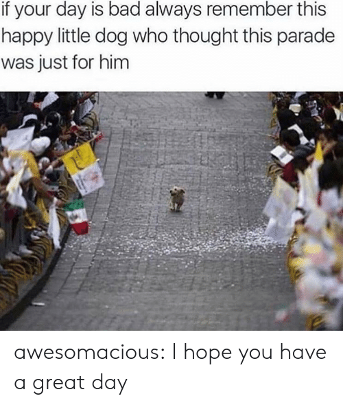 Parade: if your day is bad always remember this  happy little dog who thought this parade  was just for him awesomacious:  I hope you have a great day