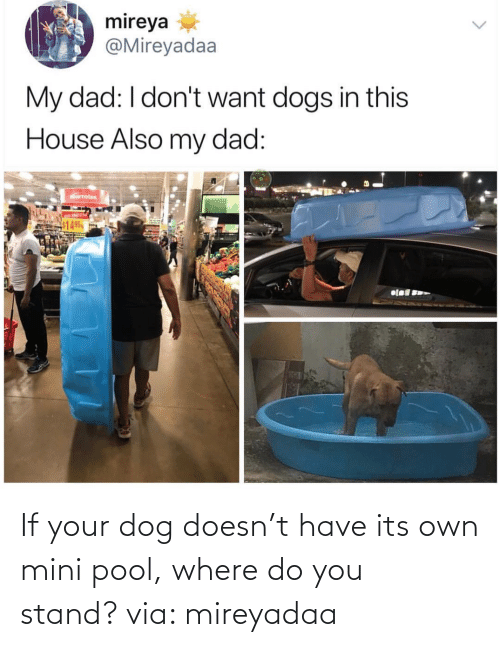 stand: If your dog doesn't have its own mini pool, where do you stand? via: mireyadaa