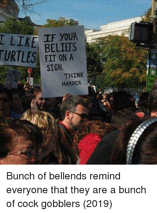 Turtles, Think, and They: IF YOUR  TURTLES ON A  SIGN  THINK  HARDER Bunch of bellends remind everyone that they are a bunch of cock gobblers (2019)