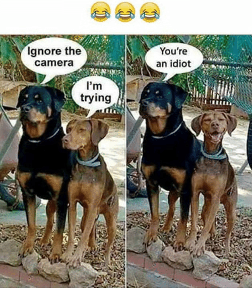 Idioticness: Ignore the  Camera  I'm  trying  You're  an idiot