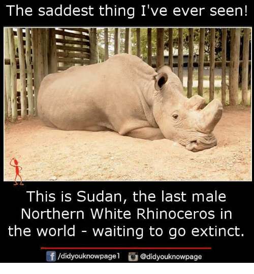 Memes, White, and World: Ihe saddest thing I've ever seen!  This is Sudan, the last male  Northern White Rhinoceros in  the world - waiting to go extinct.  d.dyouknowpagel。@didyouknowpage