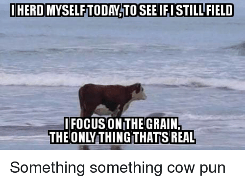 Something Something: IHERD MYSELFTODAY TO SEE IFI STILLFIELD  FOCUS ON THE GRAIN  THE ONLY THINGTHAT'S REAL Something something cow pun