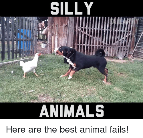 Fail, Memes, and 🤖: II  SILLY  ANIMALS Here are the best animal fails!