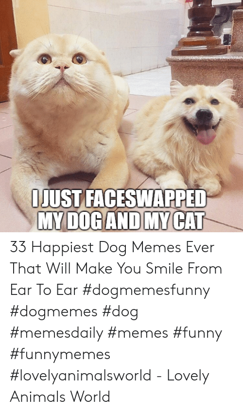 Animals, Funny, and Memes: IJUST FACESWAPPED  MY DOGAND MY CAT 33 Happiest Dog Memes Ever That Will Make You Smile From Ear To Ear #dogmemesfunny #dogmemes #dog #memesdaily #memes #funny #funnymemes #lovelyanimalsworld - Lovely Animals World