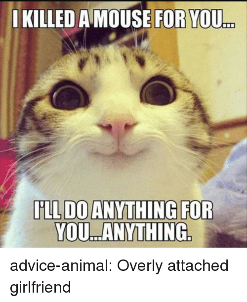 Overly Attached: IKILLED A MOUSE FOR YOU  ..  YOU. ANYTHING advice-animal:  Overly attached girlfriend