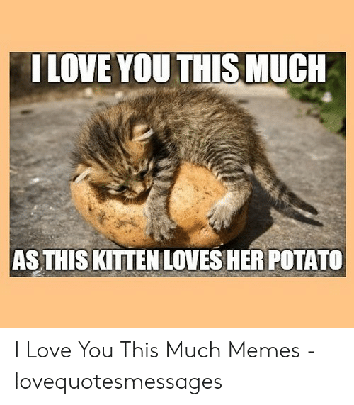 Love, Memes, and I Love You: ILOVE YOU THIS MUCH  AS THIS KITTEN LOVES HER POTATO I Love You This Much Memes - lovequotesmessages