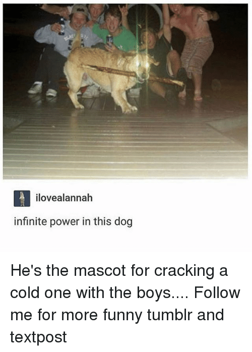 mascots: ilovealannah  infinite power in this dog He's the mascot for cracking a cold one with the boys.... Follow me for more funny tumblr and textpost