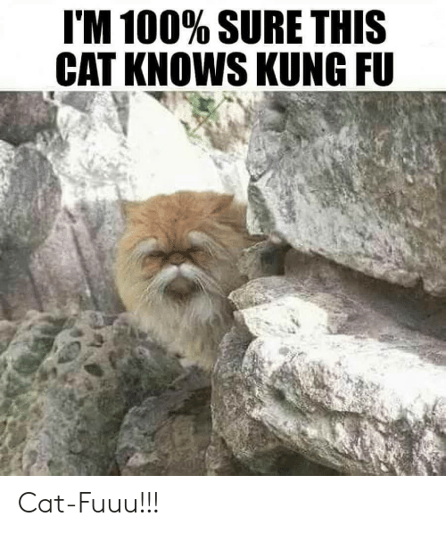 Anaconda, Cat, and Kung Fu: I'M 100% SURE THIS  CAT KNOWS KUNG FU Cat-Fuuu!!!