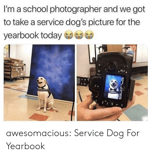 Dogs, School, and Tumblr: I'm a school photographer and we got  to take a service dog's picture for the  yearbook today  0 awesomacious:  Service Dog For Yearbook
