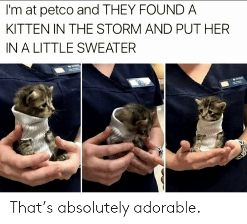 Petco, Adorable, and Her: I'm at petco and THEY FOUNDA  KITTEN IN THE STORM AND PUT HER  IN A LITTLE SWEATER That's absolutely adorable.