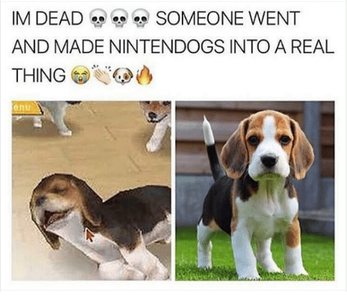 nintendogs: IM DEAD  SOMEONE WENT  AND MADE NINTENDOGS INTO A REAL  THING