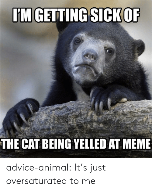 Advice Animal: IM GETTING SICK OF  THE CAT BEING YELLED AT MEME advice-animal:  It's just oversaturated to me