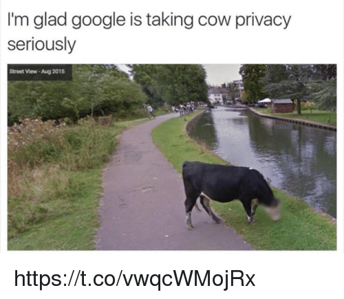 Gladded: I'm glad google is taking cow privacy  seriously  Street View-Aug 2015 https://t.co/vwqcWMojRx