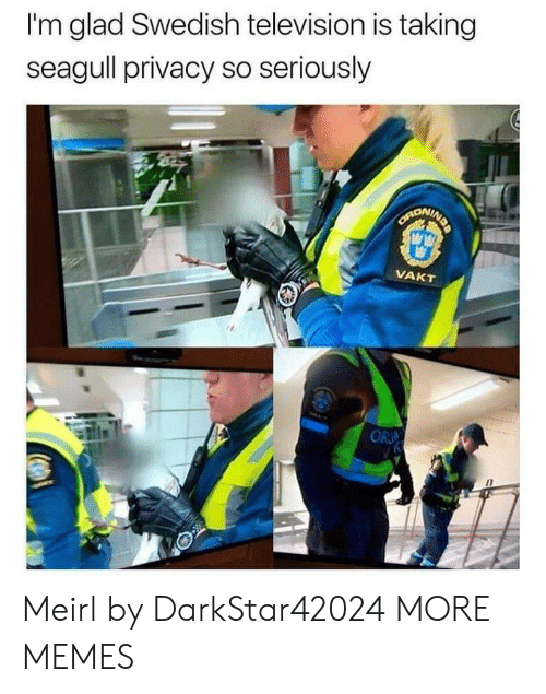Television: I'm glad Swedish television is taking  seagull privacy so seriously  SARONING  VAKT  OR Meirl by DarkStar42024 MORE MEMES