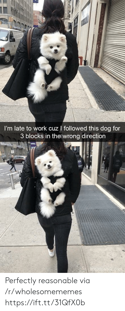 Work, Dog, and Com: I'm late to work cuz I followed this dog for  3 blocks in the wrong direction  baredpanda com  TRRAH Perfectly reasonable via /r/wholesomememes https://ift.tt/31QfX0b