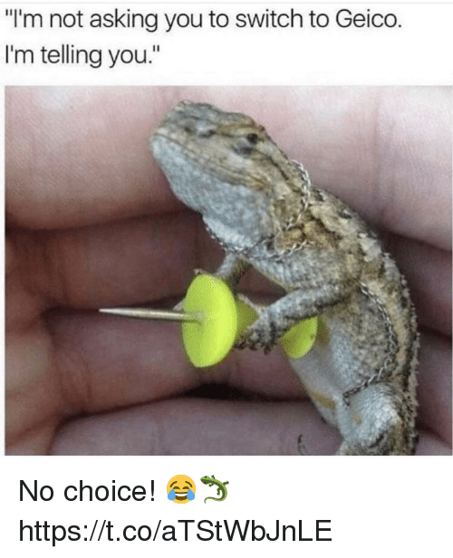 """geico: """"I'm not asking you to switch to Geico  I'm telling you."""" No choice! 😂🦎 https://t.co/aTStWbJnLE"""