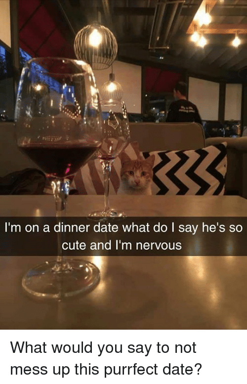 Cute, Dank, and Date: I'm on a dinner date what do I say he's so  cute and I'm nervous What would you say to not mess up this purrfect date?