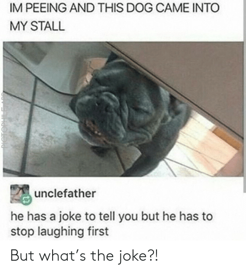 The Joke: IM PEEING AND THIS DOG CAME INTO  MY STALL  unclefather  he has a joke to tell you but he has to  stop laughing first  PICTOPHILE But what's the joke?!