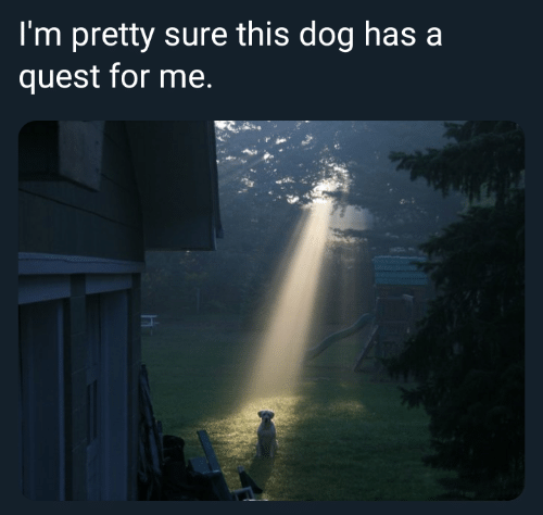 Quest, Dog, and For: I'm pretty sure this dog has a  quest for me.
