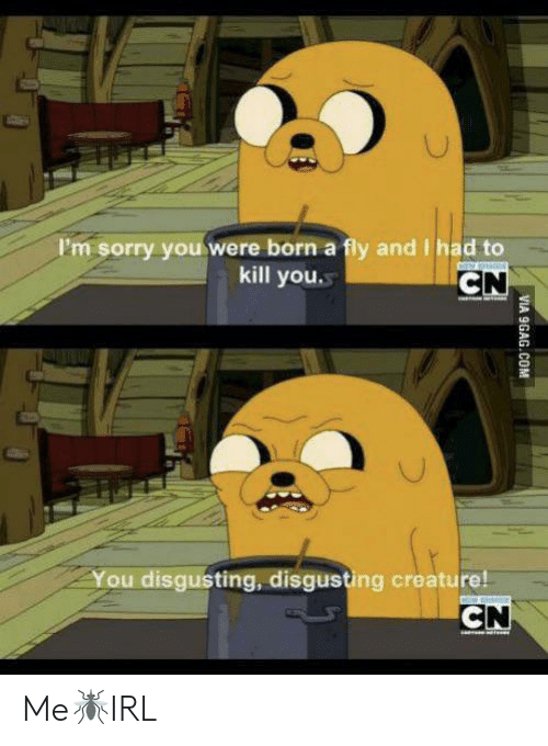 9gag, Sorry, and Creature: I'm sorry youwere born a fly and I had to  kill you  CN  You disgusting, disgusting creature!  CN  VIA 9GAG.COM Me🦟IRL