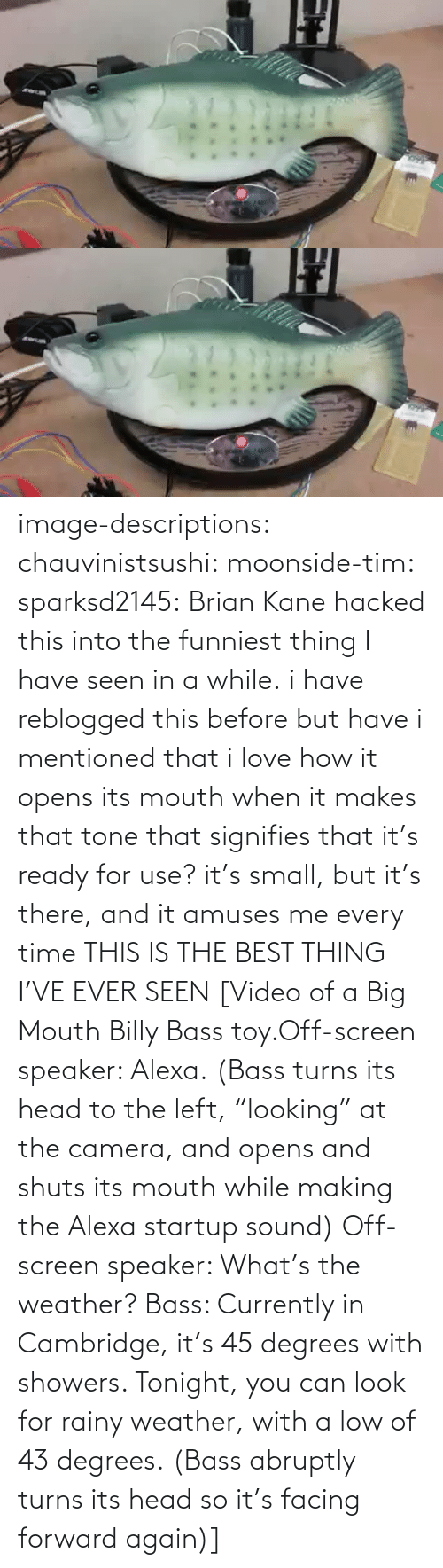 "thing: image-descriptions:  chauvinistsushi:  moonside-tim:  sparksd2145:  Brian Kane hacked this into the funniest thing I have seen in a while.  i have reblogged this before but have i mentioned that i love how it opens its mouth when it makes that tone that signifies that it's ready for use? it's small, but it's there, and it amuses me every time  THIS IS THE BEST THING I'VE EVER SEEN  [Video of a Big Mouth Billy Bass toy.Off-screen speaker: Alexa. (Bass turns its head to the left, ""looking"" at the camera, and opens and shuts its mouth while making the Alexa startup sound)  Off-screen speaker: What's the weather? Bass: Currently in Cambridge, it's 45 degrees with showers. Tonight, you can look for rainy weather, with a low of 43 degrees. (Bass abruptly turns its head so it's facing forward again)]"