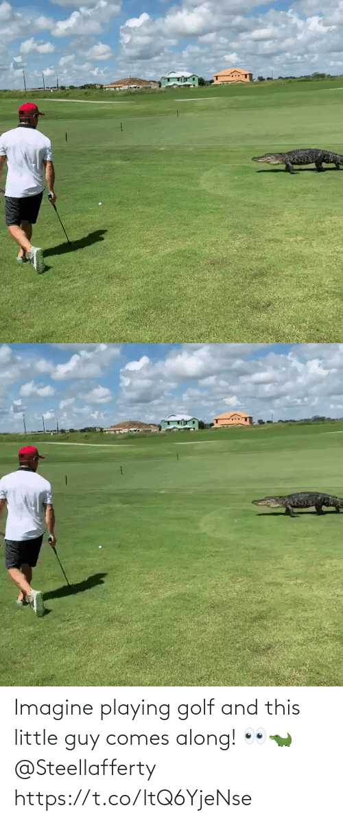 little guy: Imagine playing golf and this little guy comes along! 👀🐊 @Steellafferty https://t.co/ltQ6YjeNse