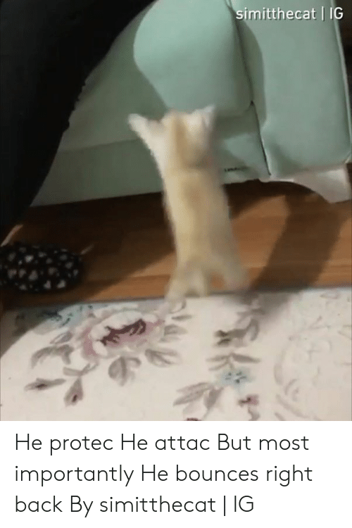 He Attac: imitthecat IG He protec He attac But most importantly He bounces right back  By simitthecat | IG