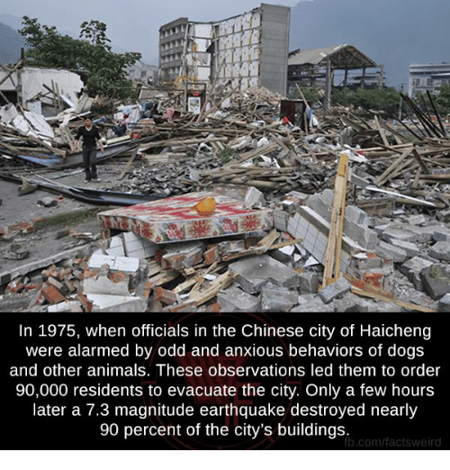 Observative: In 1975, when officials in the Chinese city of Haicheng  were alarmed by odd and anxious behaviors of dogs  and other animals. These observations led them to order  90,000 residents to evacuate the city. Only a few hours  later a 7.3 magnitude earthquake destroyed nearly  90 percent of the city's buildings.  b.com/factsweird
